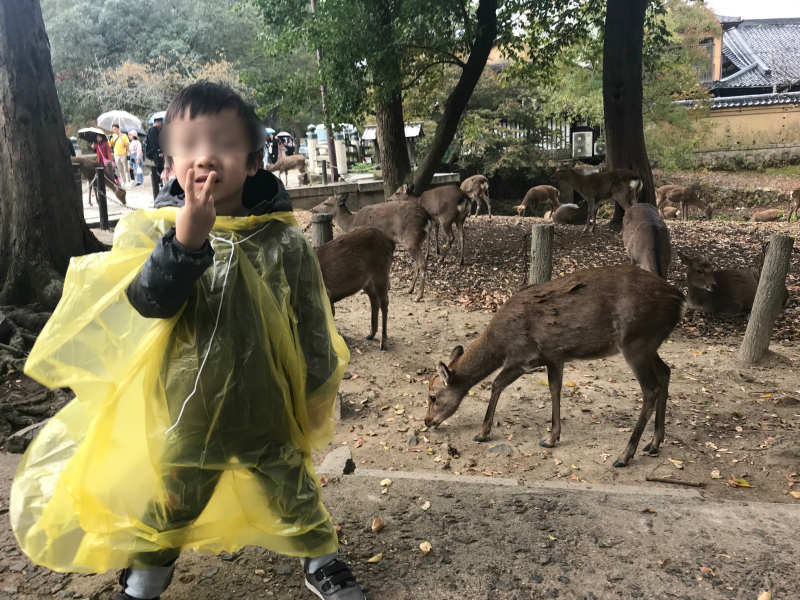 1111-Private-Tour-from-Osaka-to-Nara-Park-Deer-by-Taxi3